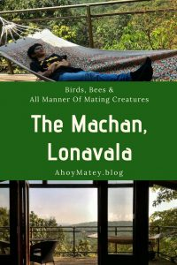 The Machan Lonavala - Birds, Bees And All Manner Of Mating Creatures