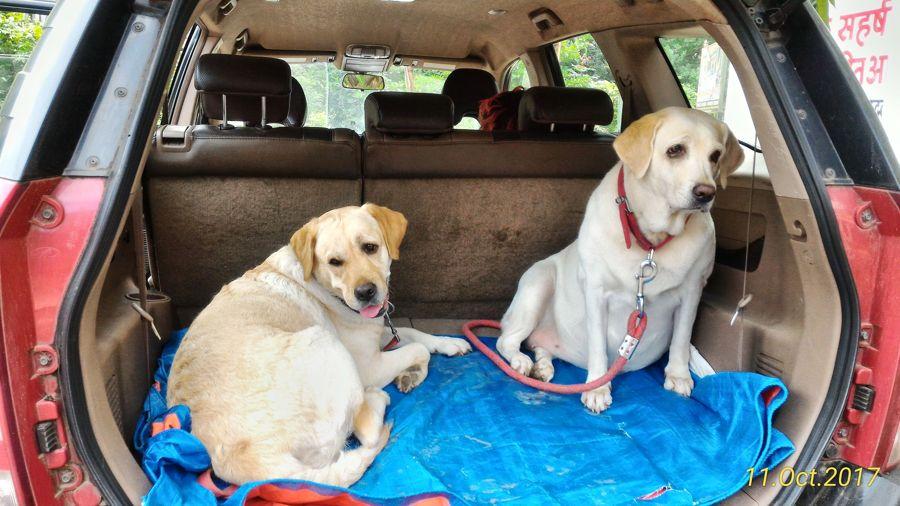 A Road Trip With Dogs To Murud Beach, Dapoli