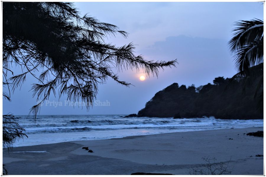 Talpona Beach, Goa: Summer Road Trip With The Dogs