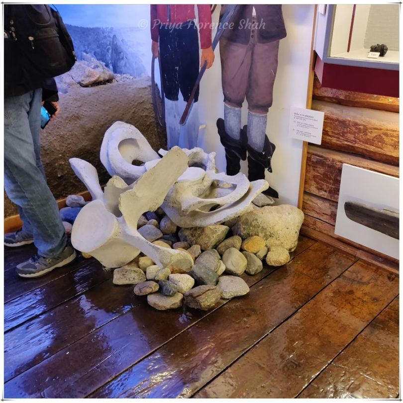 As Norway is one of the few whaling nations, it's not unusual to find whale bones